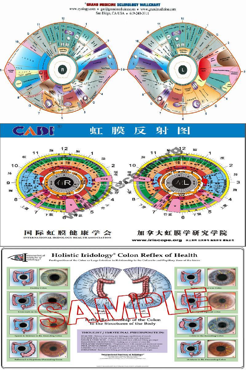 iridology chart pdf