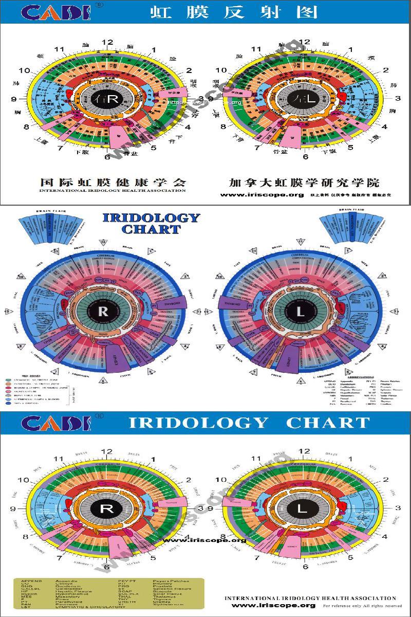 equine iridology chart