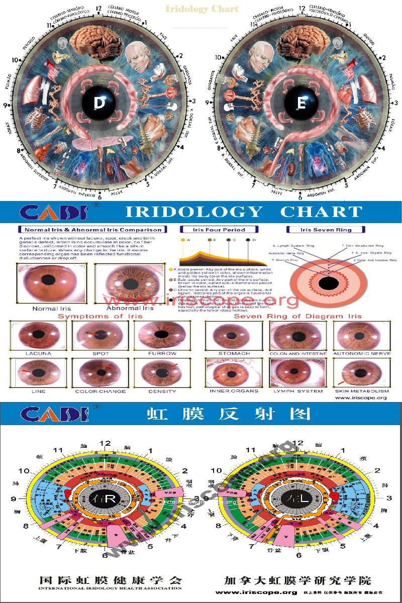 irodology chart