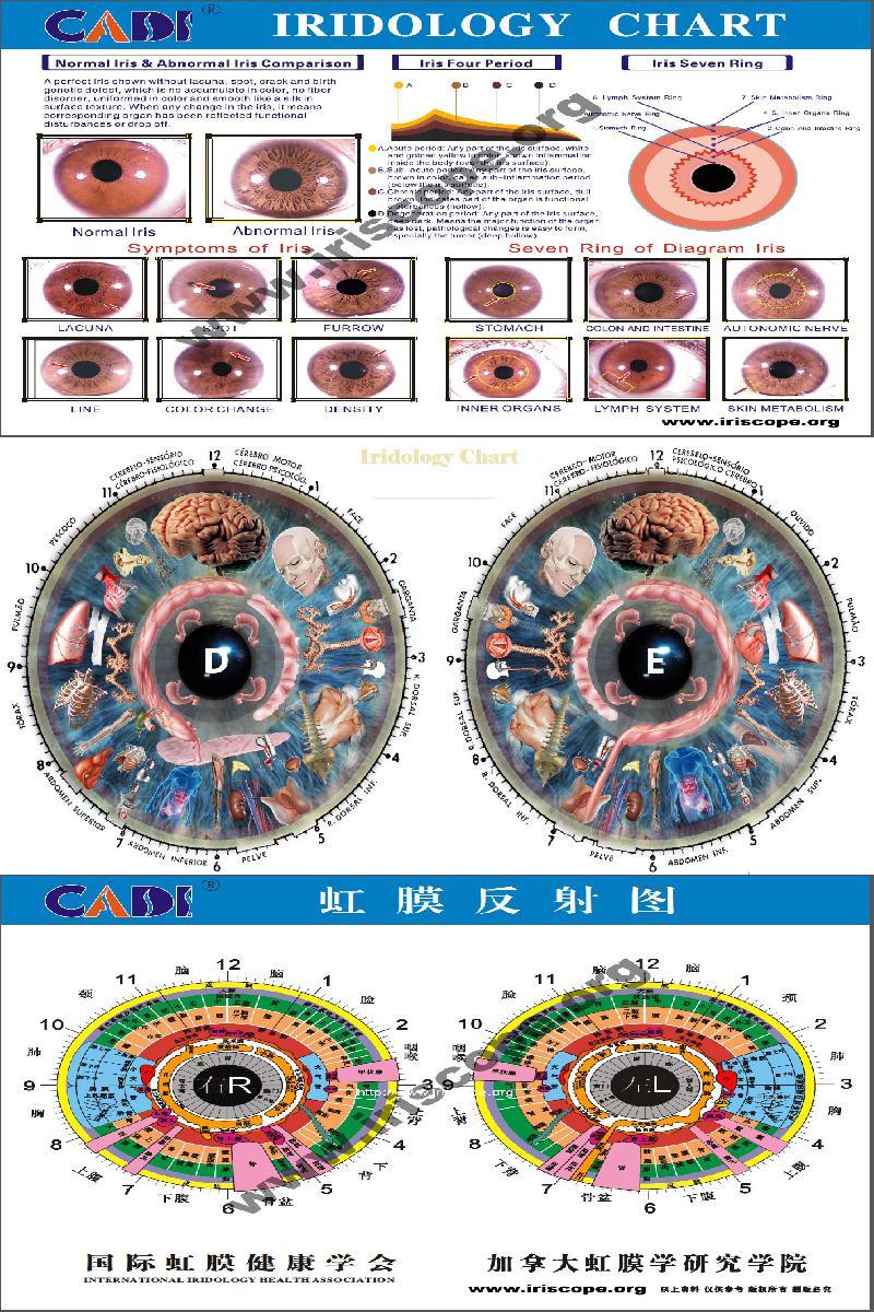cat iridology chart