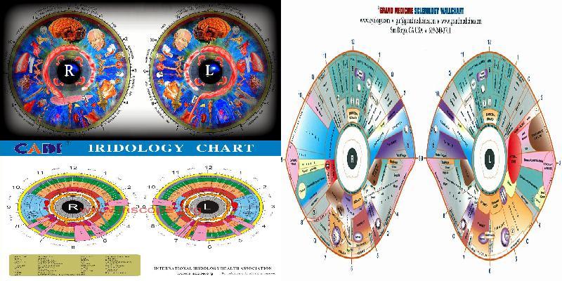 iridology chart high resolution