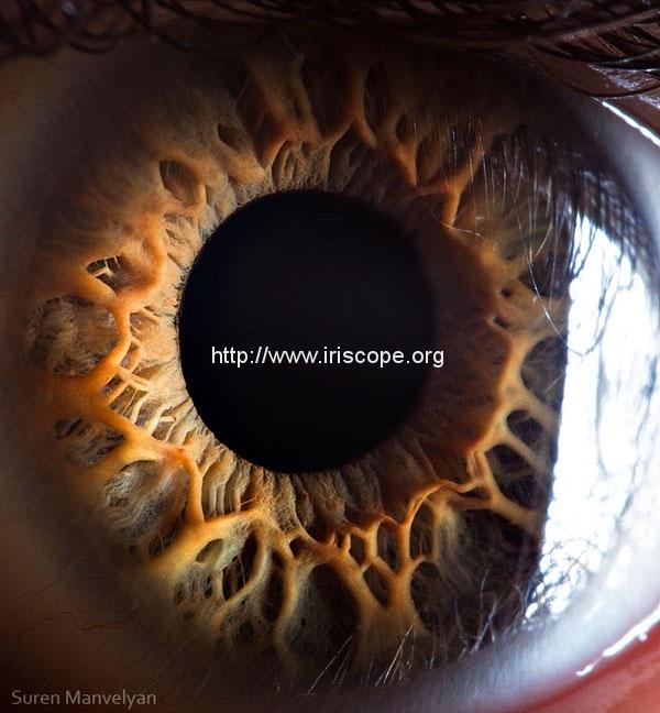 21 Extreme Close Ups of the Human Eye 4