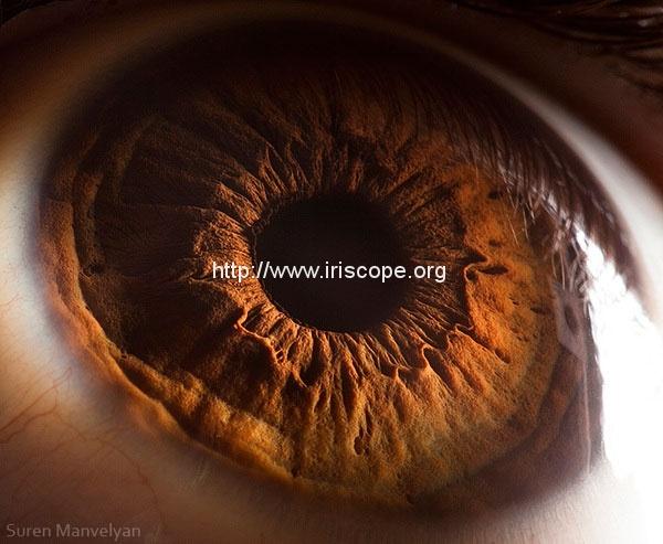 21 Extreme Close Ups of the Human Eye 6