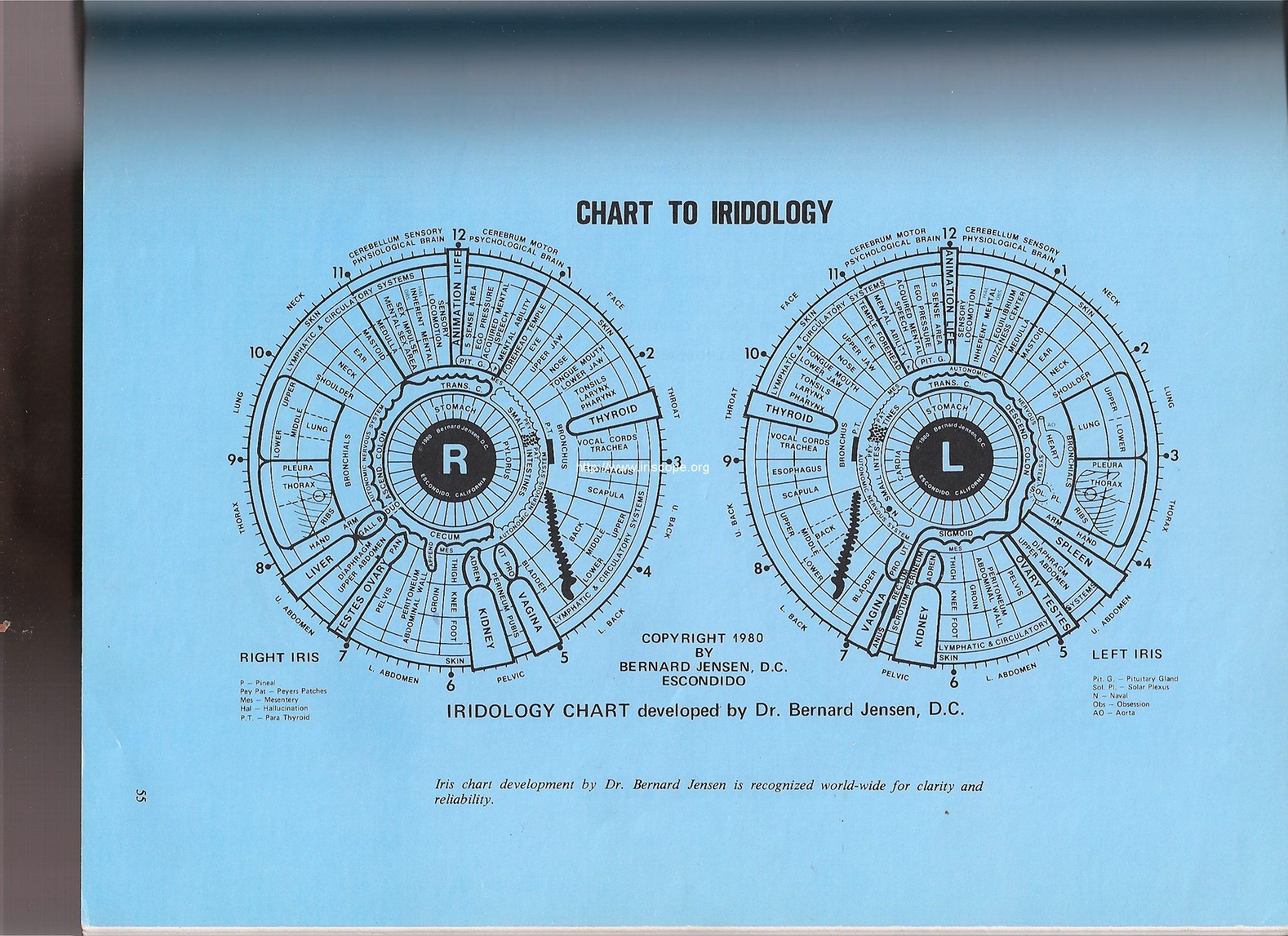 Dr. Jensen's iridology chart