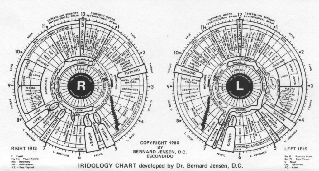 IRIDOLOGY CAHART DEVELOPED BY DR. Bernard Jensen,D.C.