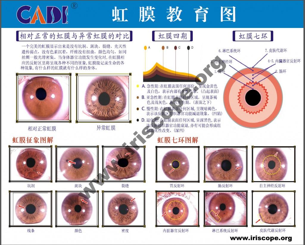 chinese iridology chart