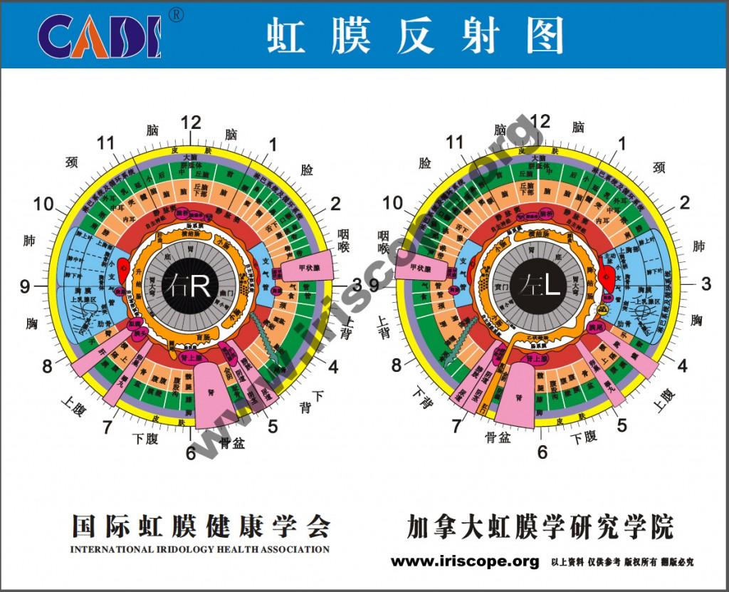 iridology chart for chinese