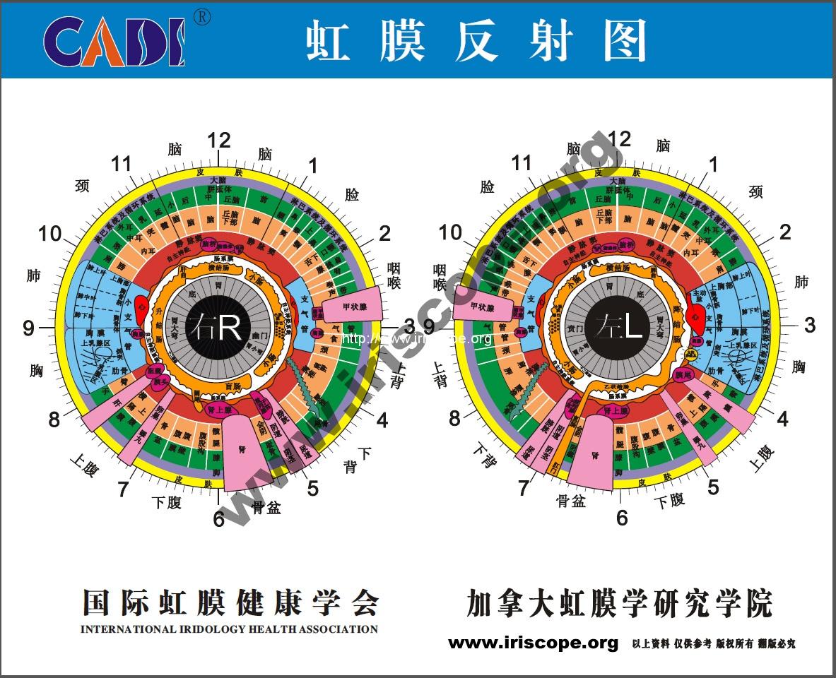 Iridology chart iriscope iridology camera iriscope camera iridology chart for chinese nvjuhfo Image collections