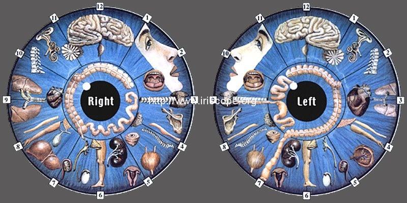 iridology chart images