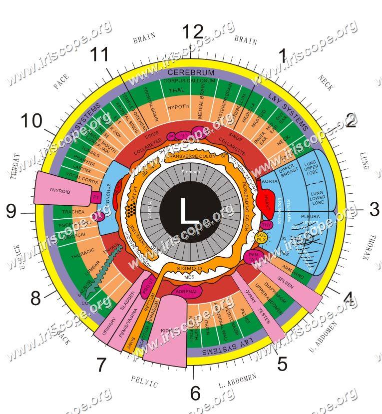 iridology of left chart