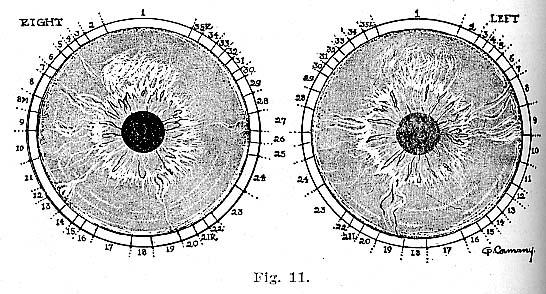 Fig.11.lg