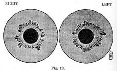 Fig.19.sm