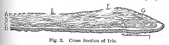 Fig.2.lg