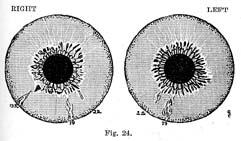 Fig.24.sm