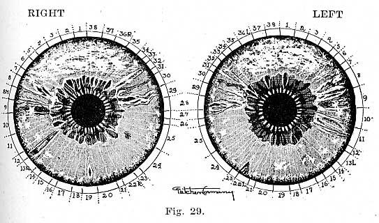 Fig.29.lg