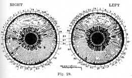 Fig.29.sm