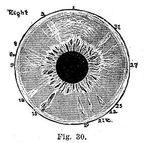 Fig.30.lg