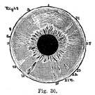 Fig.30.sm