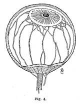 Fig.4.sm