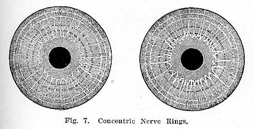 Fig.7.lg