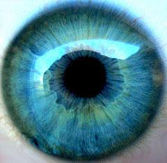 IRIS-ANATOMY-7-BLUE-EYE