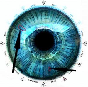 IRIS-ANATOMY-7-BLUE-EYEwith-overlay-300x296