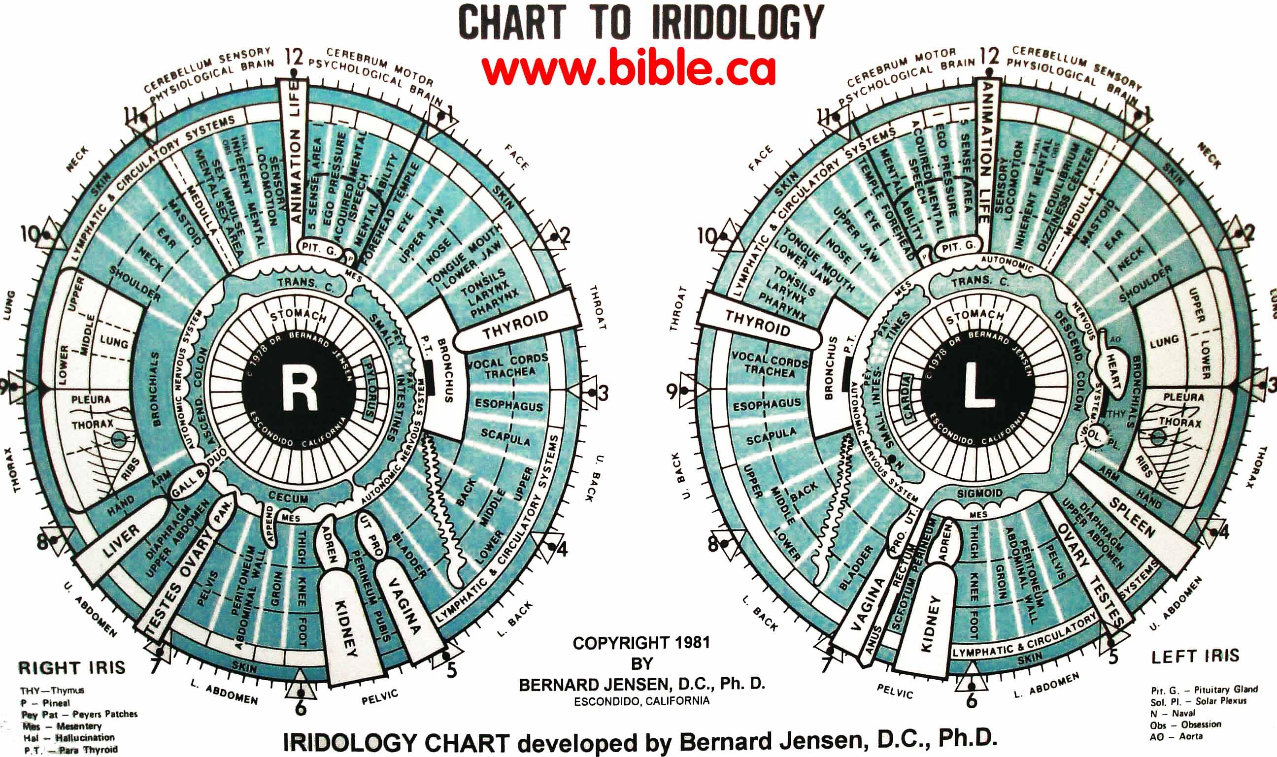 12 best iridology chartsleft eye chartright eye chart iriscope iridology chart bernard jensen 1981ad 10cf2393089f68bc18729e078430face geenschuldenfo Gallery