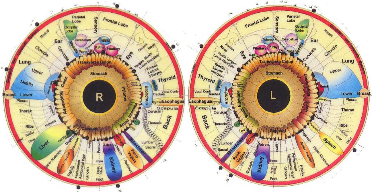 Behavi Iridology Iris Chart Map