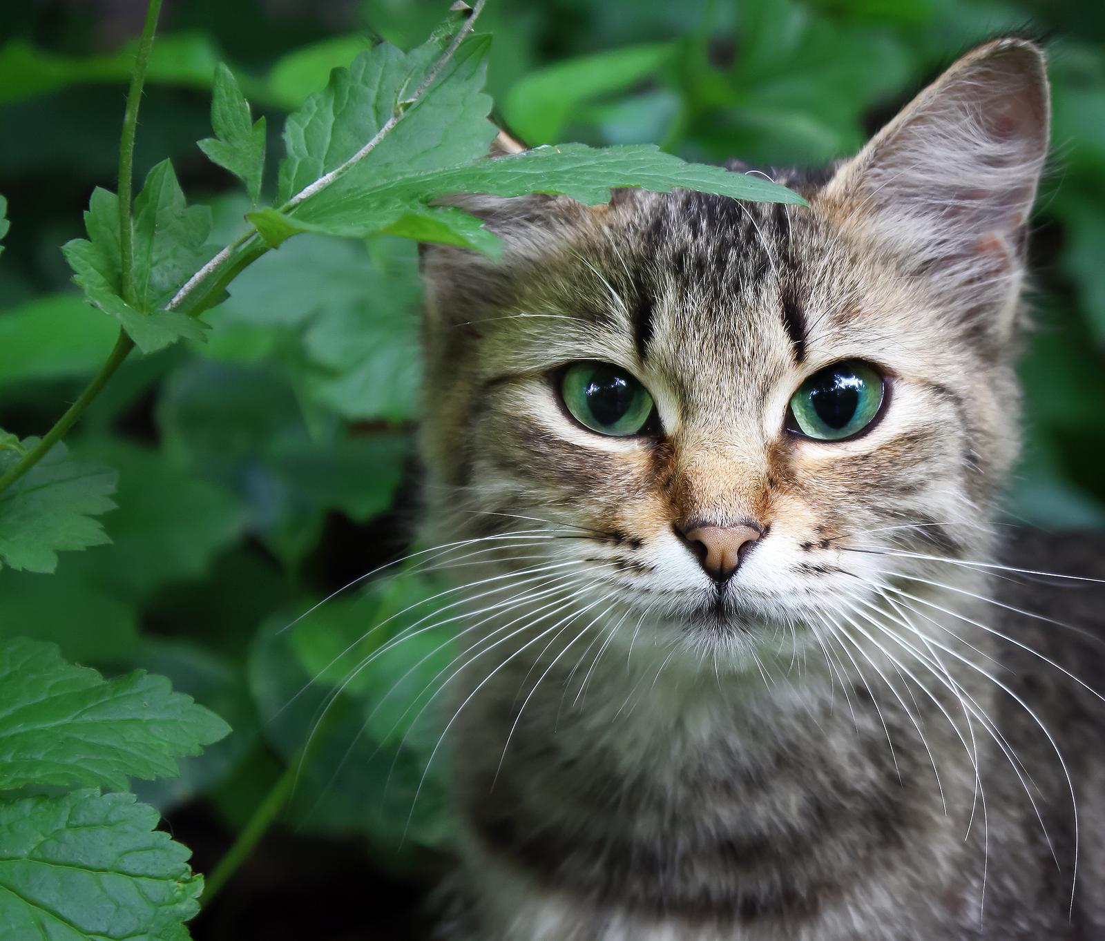 Cat In A Grass