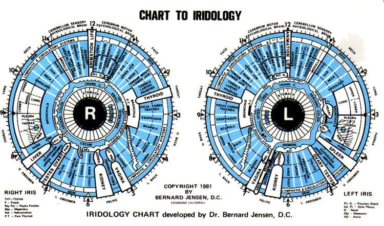 Dr.Bernard Jensen Iridology Chart