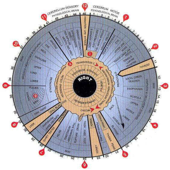 Iridology Chart right chart