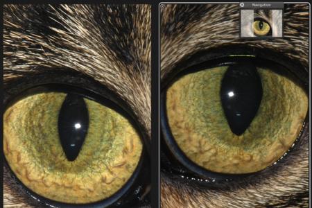 cat Iridology Chart 7
