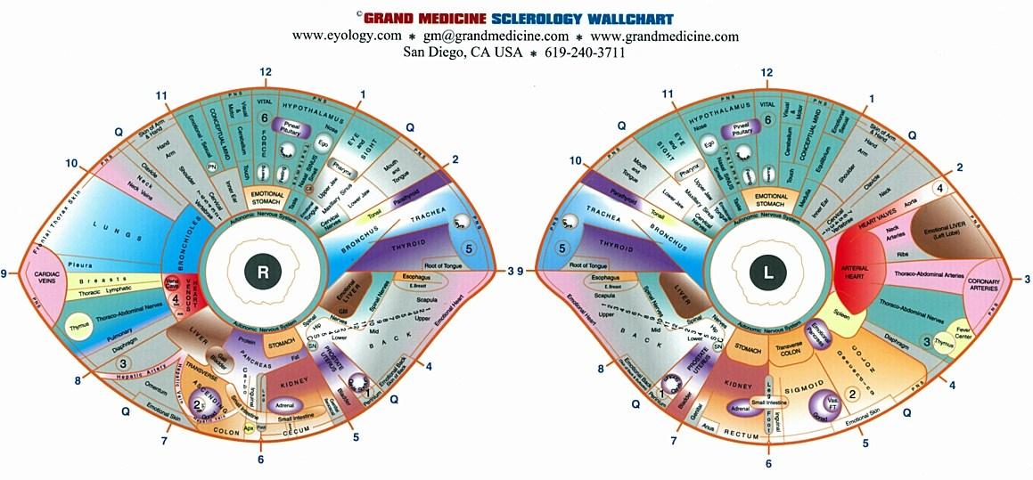 rayid iridology chart
