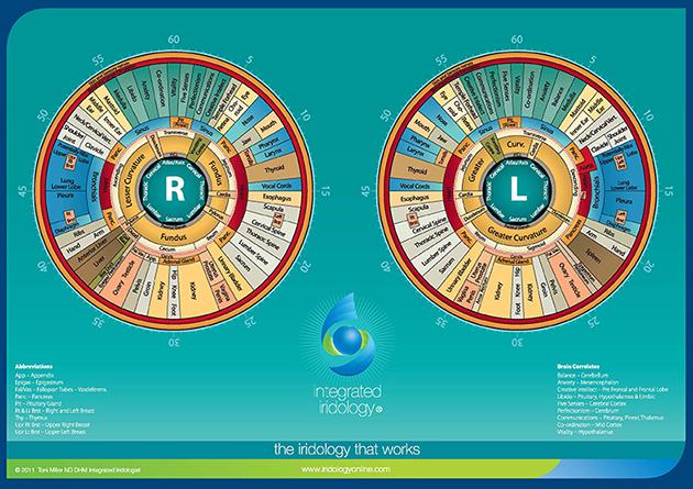 toni miller iridology chart