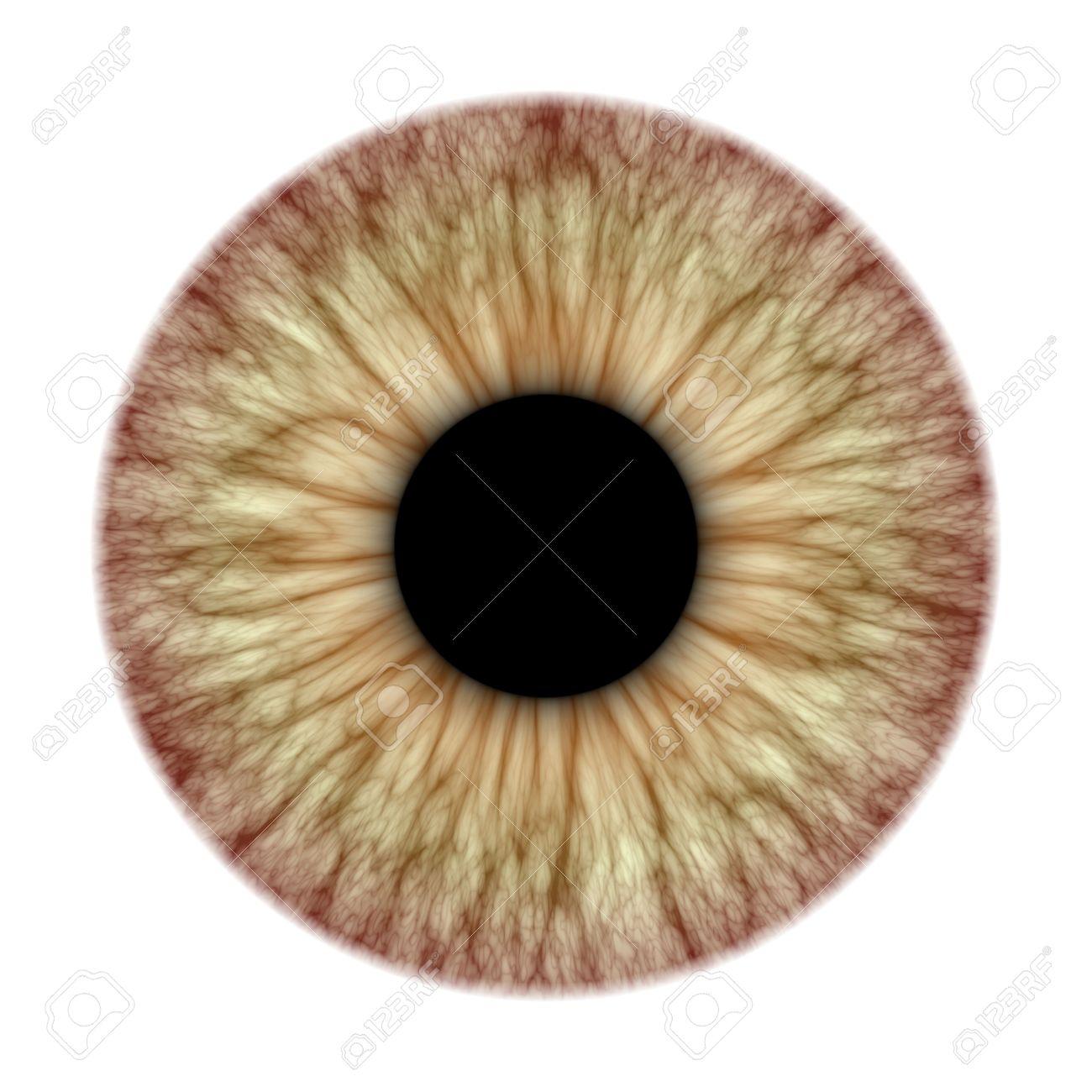 iridología (104)