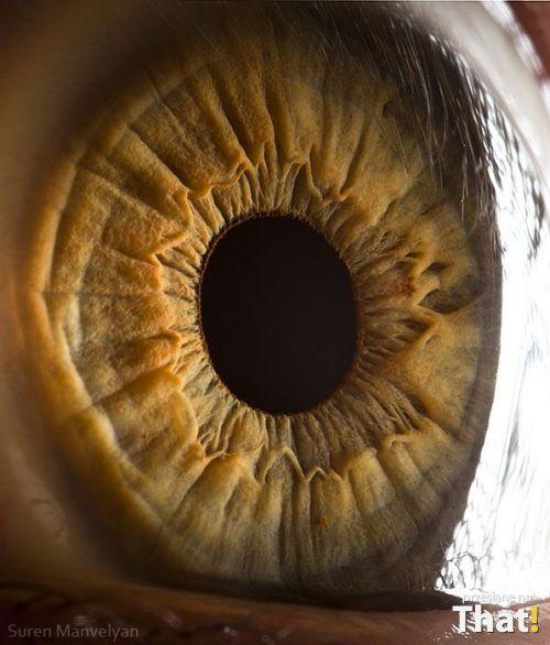 iridología (4)
