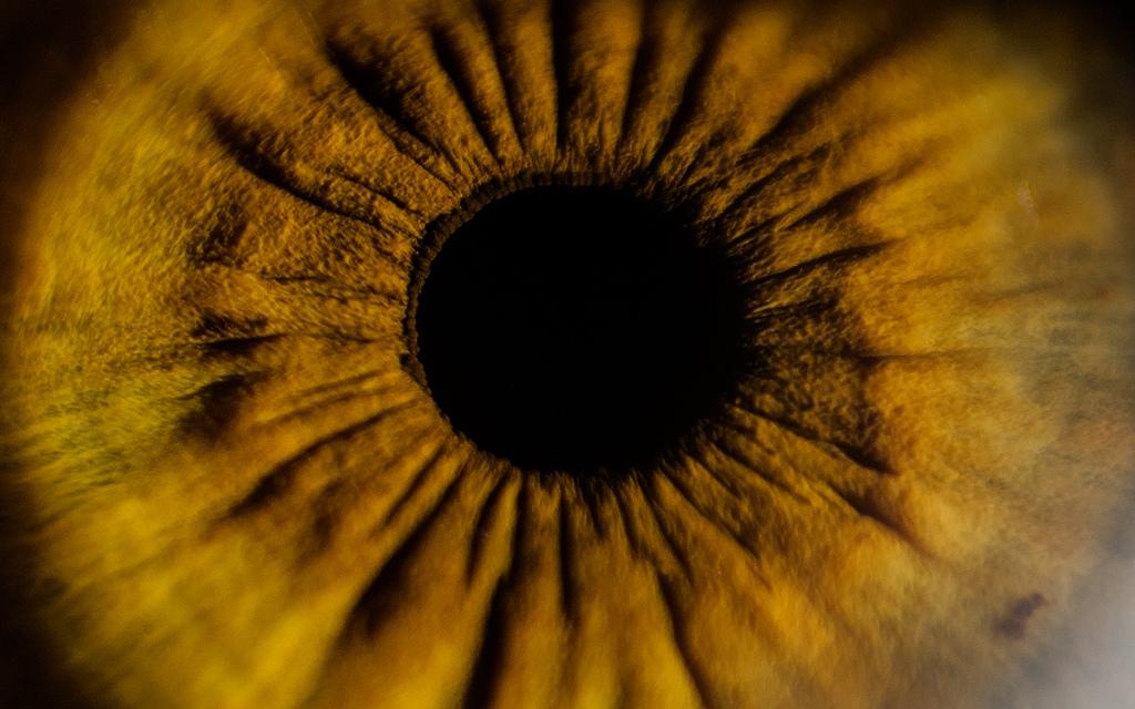 iridología (89)