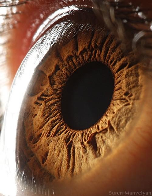 iridología (91)