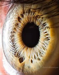 iridología (92)