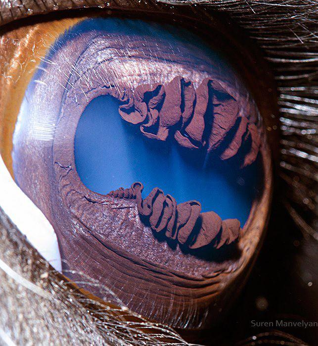 iridología en ingles 1