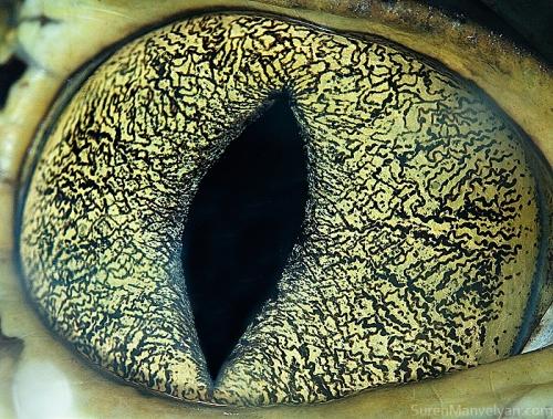 iridología en ingles 2