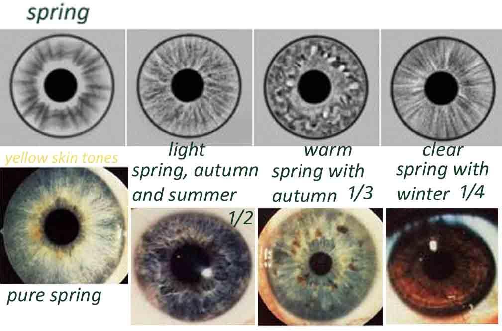 rayid iridology 18