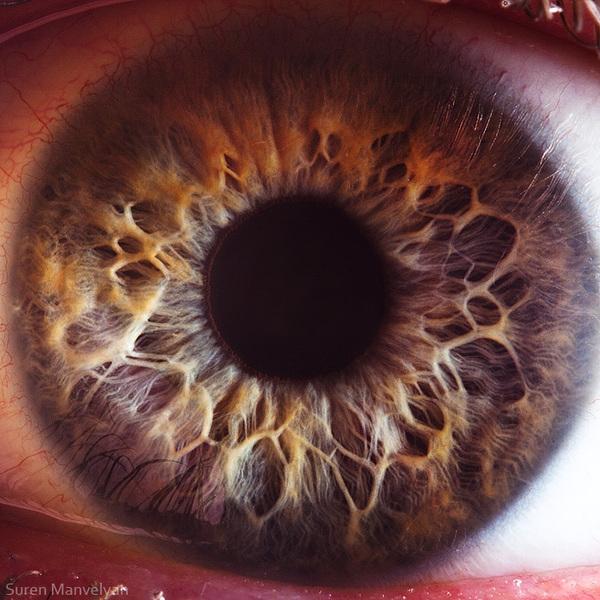 iridology images (4)