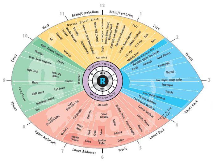 read iridology chart
