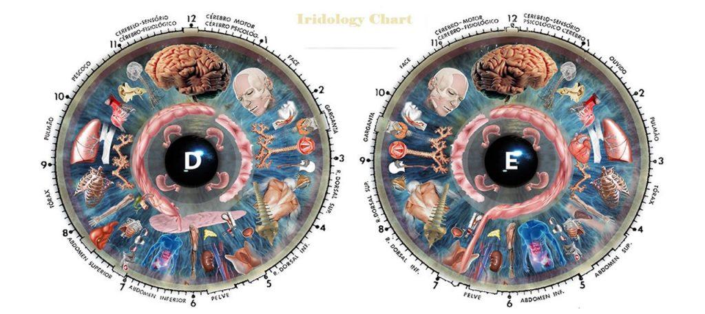 iridologist chart