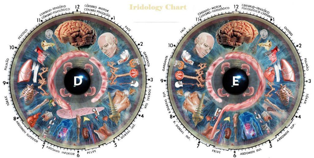 iridology chart large