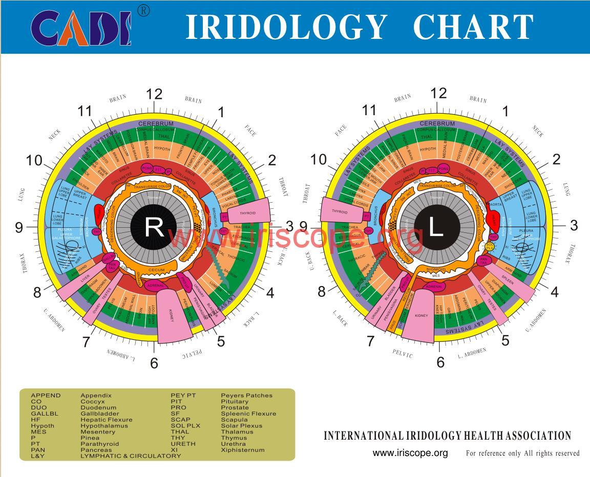 iridology chart printable
