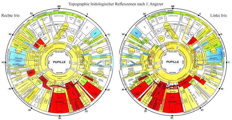 iris diagnosis chart