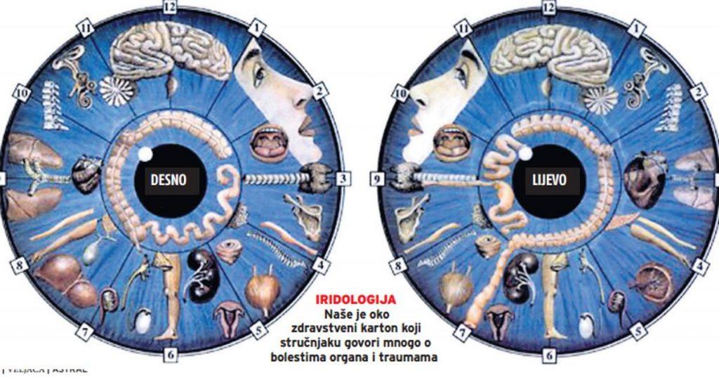 iridology diagnosis chart