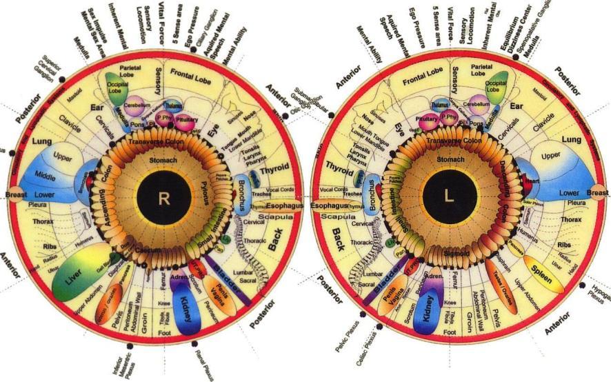 iris reading chart